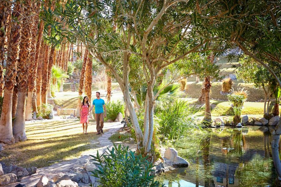 A couple walk hand in hand down a palm-tree lined path.
